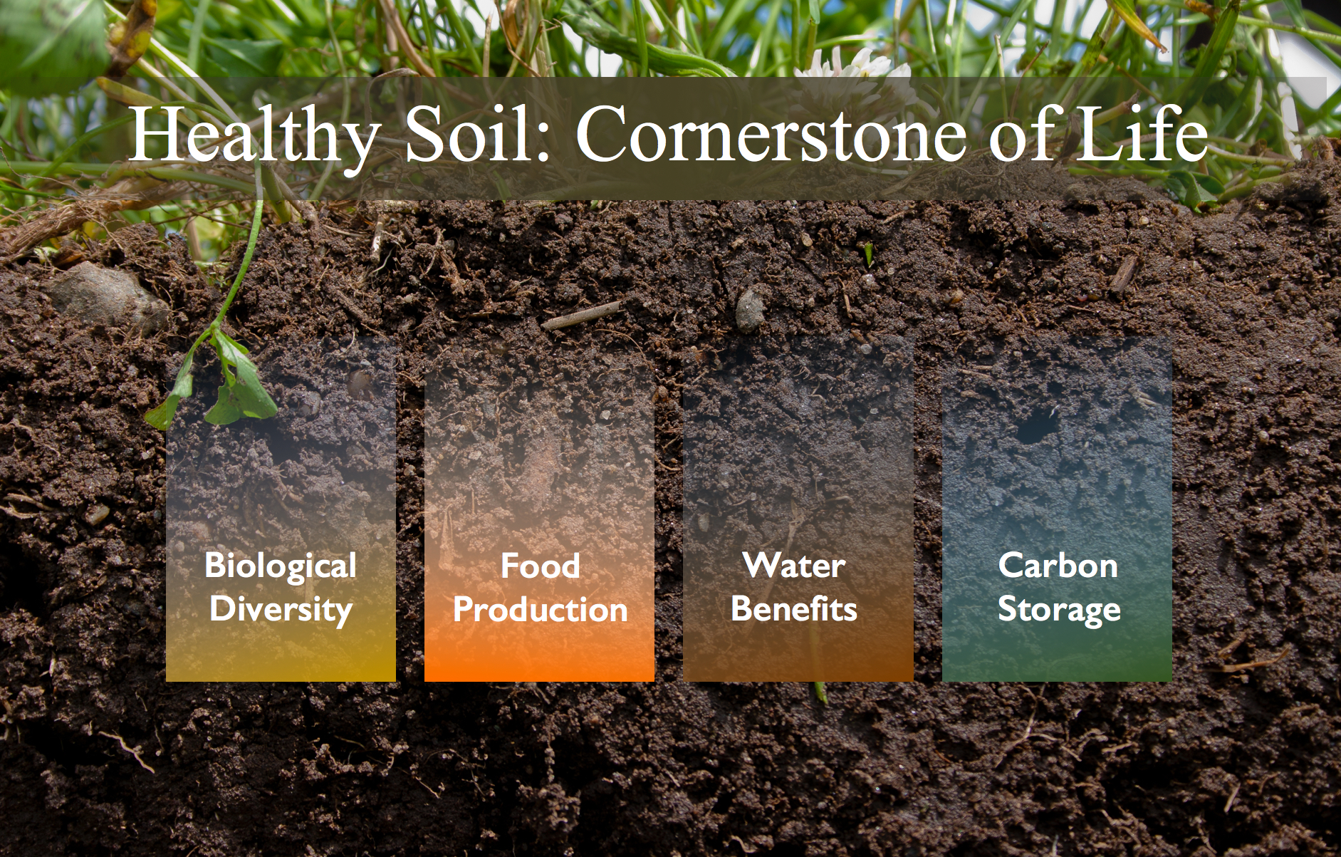 Soil importance definition example functions various for Soil is an example of