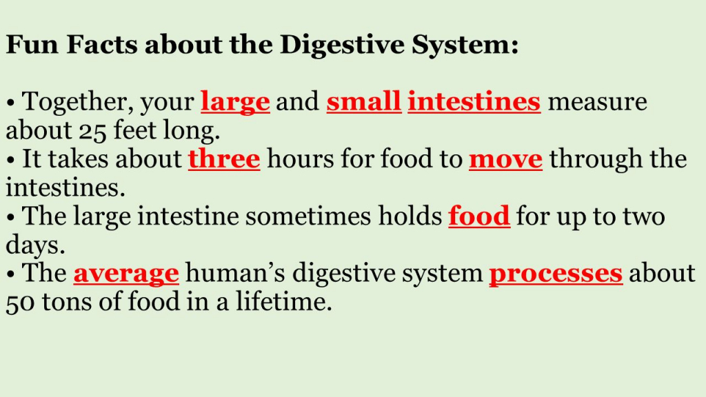 Digestive System Interesting Facts Human Body Systems Structure And